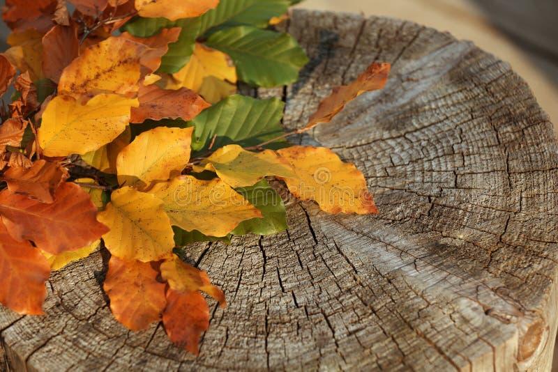 Ζωηρόχρωμα φύλλα φθινοπώρου στο ξύλινο κολόβωμα στοκ φωτογραφία