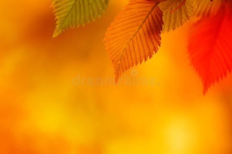 Ζωηρόχρωμα φύλλα φθινοπώρου στοκ εικόνες με δικαίωμα ελεύθερης χρήσης