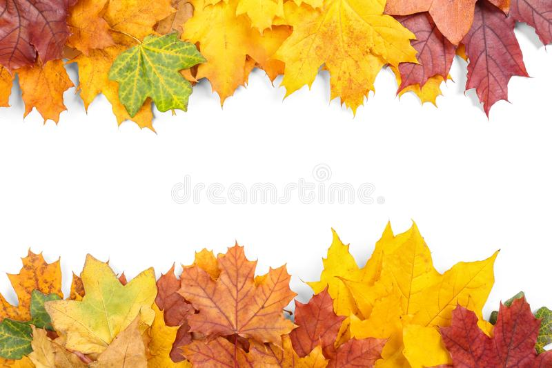 ζωηρόχρωμα φύλλα φθινοπώρ&omicr στοκ εικόνα με δικαίωμα ελεύθερης χρήσης