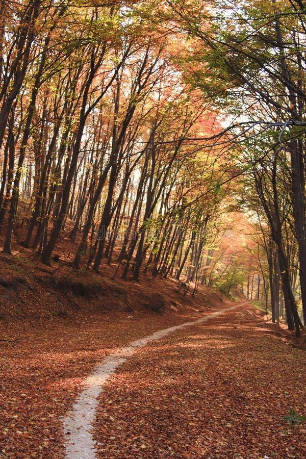 ζωηρόχρωμα φύλλα στοκ εικόνα