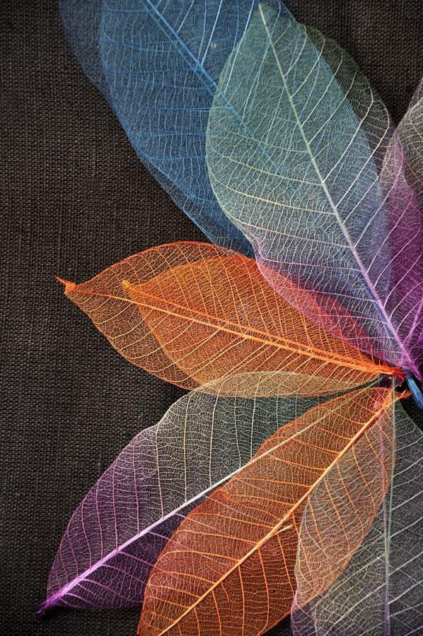 Ζωηρόχρωμα φύλλα σκελετών στη μορφή λουλουδιών στοκ εικόνα με δικαίωμα ελεύθερης χρήσης