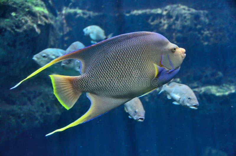 ζωηρόχρωμα ψάρια τροπικά στοκ φωτογραφίες με δικαίωμα ελεύθερης χρήσης