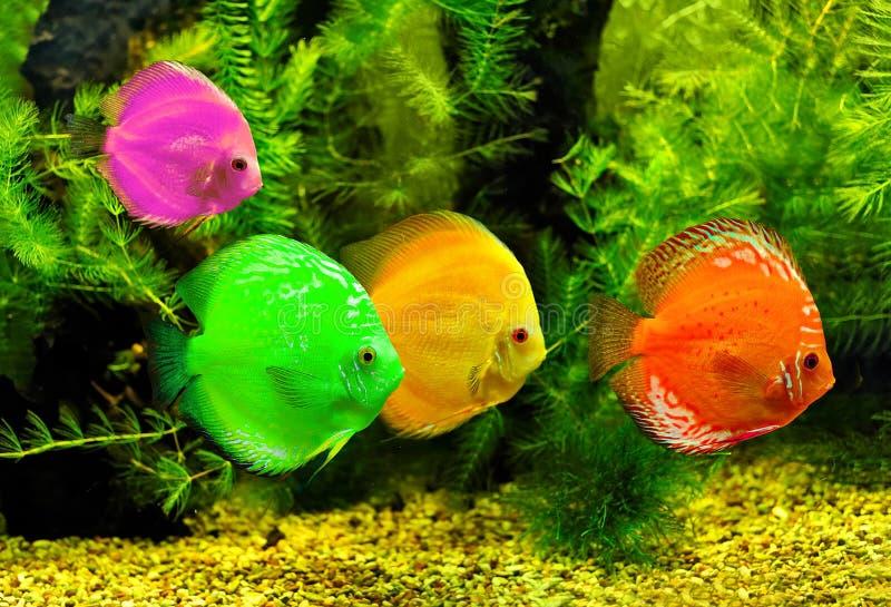 ζωηρόχρωμα ψάρια στοκ εικόνα με δικαίωμα ελεύθερης χρήσης