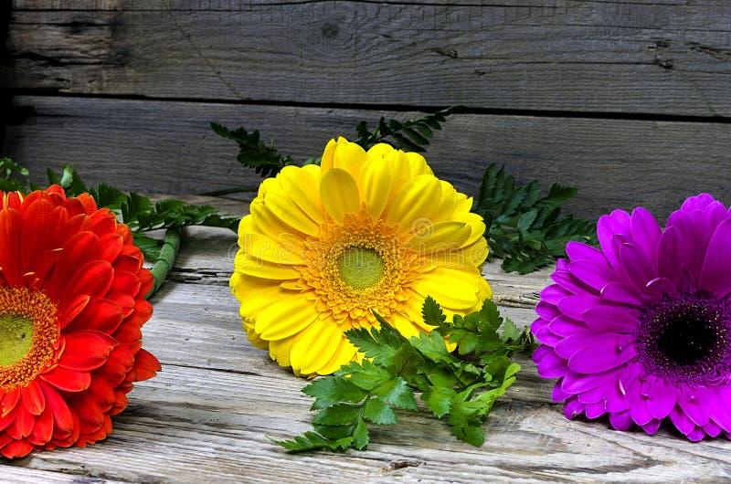 ζωηρόχρωμα gerberas τρία στοκ φωτογραφία