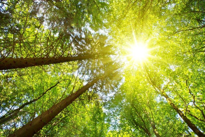 Ζωηρόχρωμα treetops στο δάσος πτώσης με τον ήλιο που λάμπει αν και δέντρα στοκ φωτογραφίες με δικαίωμα ελεύθερης χρήσης