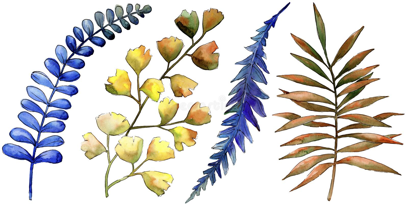 Ζωηρόχρωμες εγκαταστάσεις φρένων Watercolor Floral φύλλωμα βοτανικών κήπων φυτών φύλλων Απομονωμένο στοιχείο απεικόνισης ελεύθερη απεικόνιση δικαιώματος