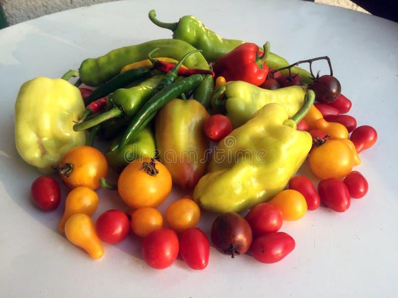 Ζωηρόχρωμες ντομάτες και πάπρικα λαχανικών στο άσπρο υπόβαθρο στούντιο στοκ φωτογραφία με δικαίωμα ελεύθερης χρήσης