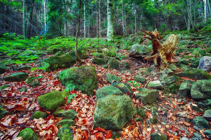 Ζωηρόχρωμες πράσινες mossy μεγάλες πέτρες στοκ εικόνες με δικαίωμα ελεύθερης χρήσης