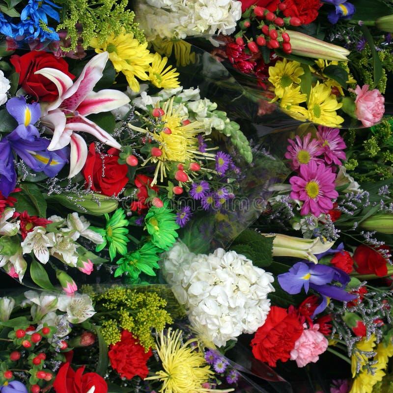 ζωηρόχρωμη άνοιξη λουλουδιών στοκ φωτογραφίες με δικαίωμα ελεύθερης χρήσης