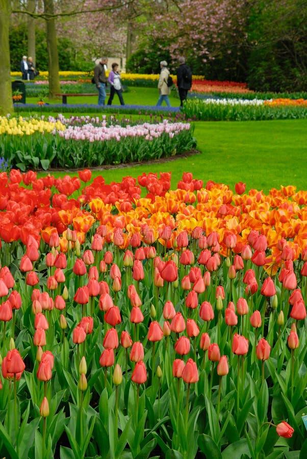ζωηρόχρωμη άνοιξη λουλο&upsil στοκ εικόνα με δικαίωμα ελεύθερης χρήσης