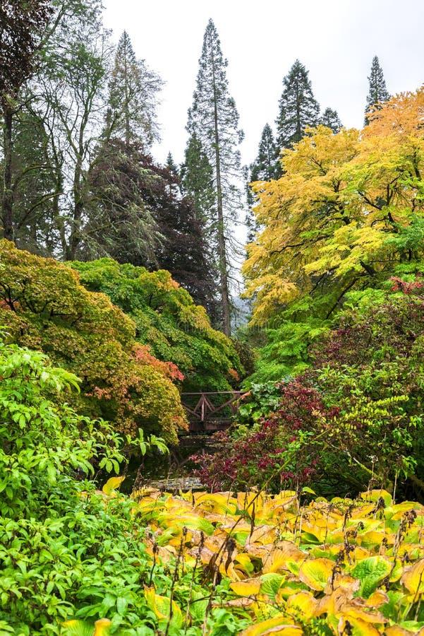 Ζωηρόχρωμη άποψη τοπίων φθινοπώρου στο βοτανικό κήπο Benmore, Σκωτία στοκ εικόνες με δικαίωμα ελεύθερης χρήσης