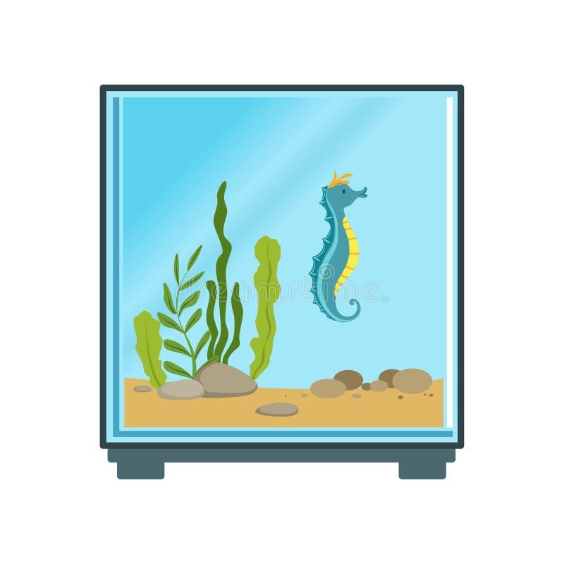 Ζωηρόχρωμη απεικόνιση του ενυδρείου κύβων με το μπλε άλογο θάλασσας και το διάφορες φύκι και τις πέτρες διακοσμήσεων Διάνυσμα κιν διανυσματική απεικόνιση