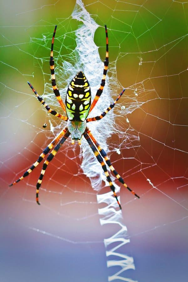 ζωηρόχρωμη αράχνη στοκ φωτογραφία