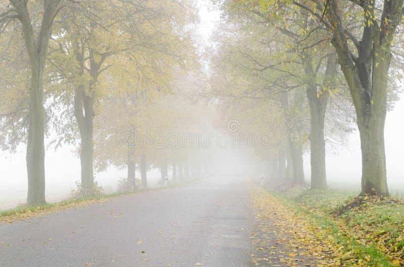 Ζωηρόχρωμη αλέα δέντρων ασβέστη κατά μήκος του δρόμου στοκ φωτογραφία με δικαίωμα ελεύθερης χρήσης