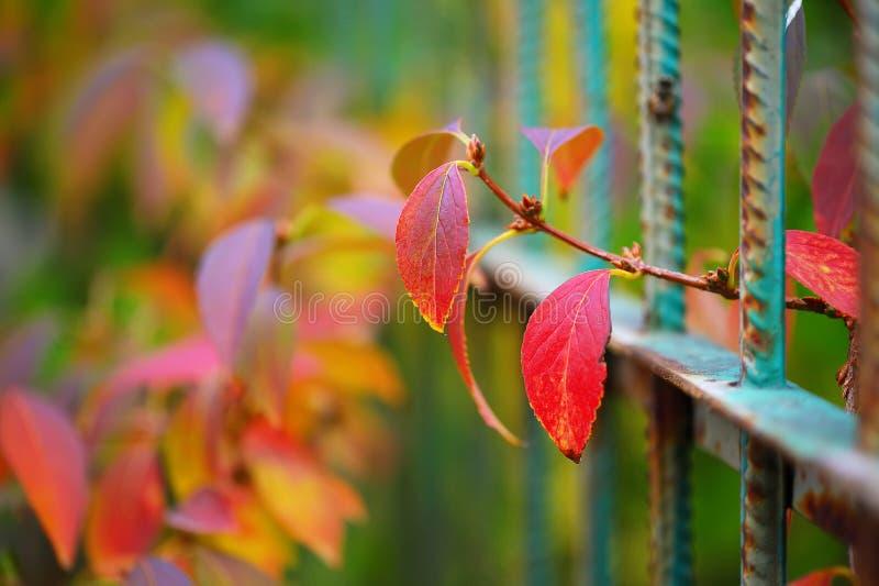 Ζωηρόχρωμη βλάστηση στην εποχή φθινοπώρου στοκ εικόνα