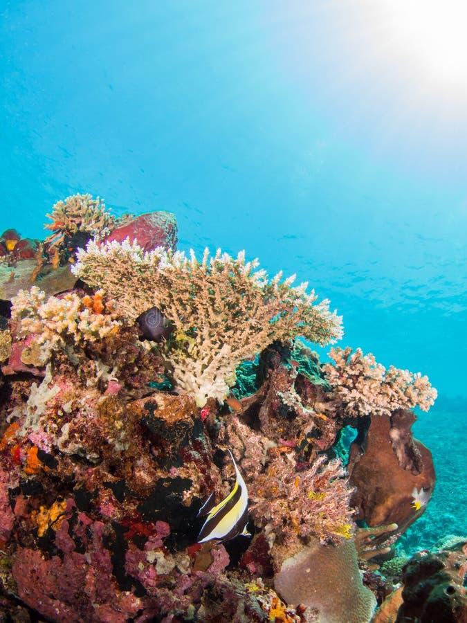 Ζωηρόχρωμη κοραλλιογενής ύφαλος στοκ εικόνα με δικαίωμα ελεύθερης χρήσης