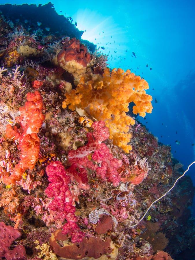 Ζωηρόχρωμη κοραλλιογενής ύφαλος στοκ φωτογραφίες με δικαίωμα ελεύθερης χρήσης