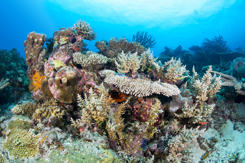 Ζωηρόχρωμη κοραλλιογενής ύφαλος στοκ φωτογραφία με δικαίωμα ελεύθερης χρήσης