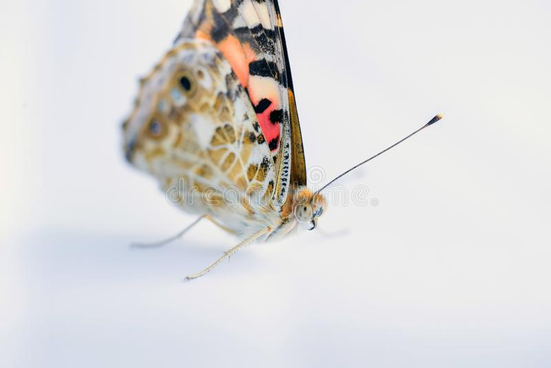 Ζωηρόχρωμη πεταλούδα σε ένα άσπρο υπόβαθρο r στοκ φωτογραφίες