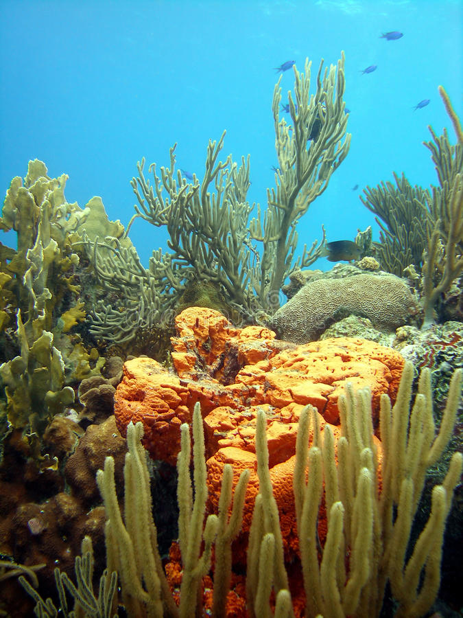 ζωηρόχρωμη σκηνή κοραλλι&omi στοκ εικόνα με δικαίωμα ελεύθερης χρήσης