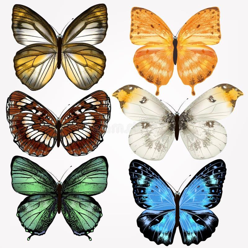 Ζωηρόχρωμη συλλογή των διανυσματικών ρεαλιστικών πεταλούδων για το σχέδιο απεικόνιση αποθεμάτων