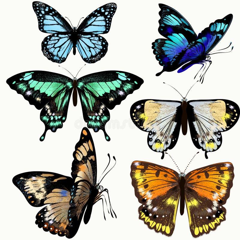 Ζωηρόχρωμη συλλογή των διανυσματικών ρεαλιστικών πεταλούδων διανυσματική απεικόνιση