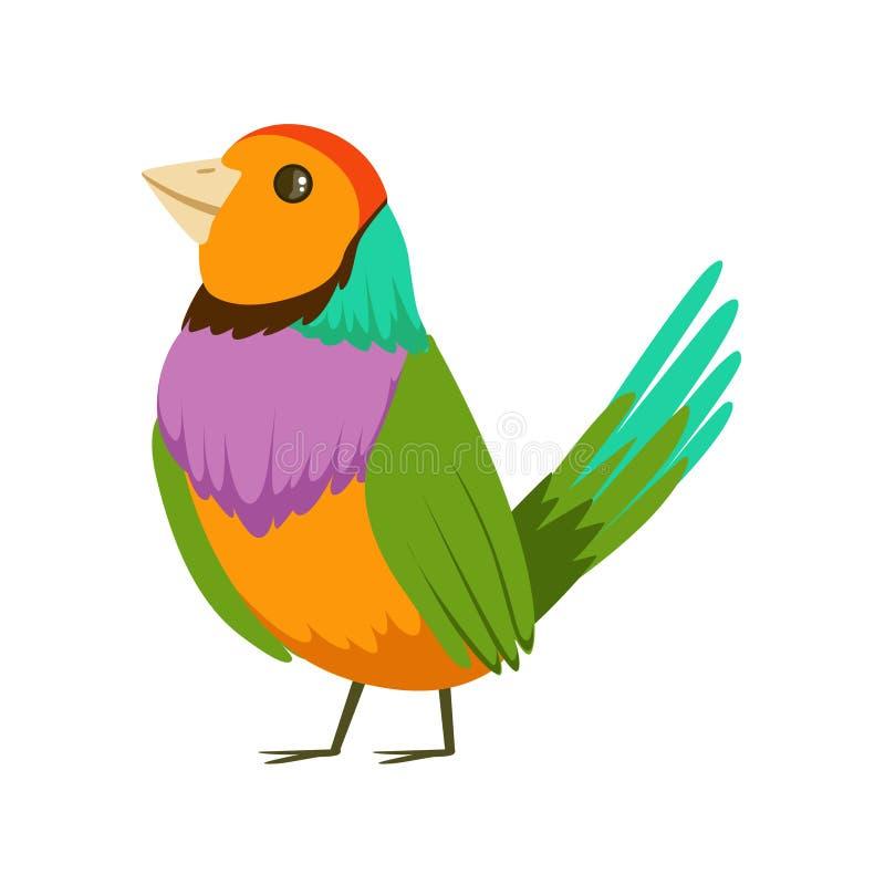 Ζωηρόχρωμη τροπική διανυσματική απεικόνιση πουλιών ελεύθερη απεικόνιση δικαιώματος