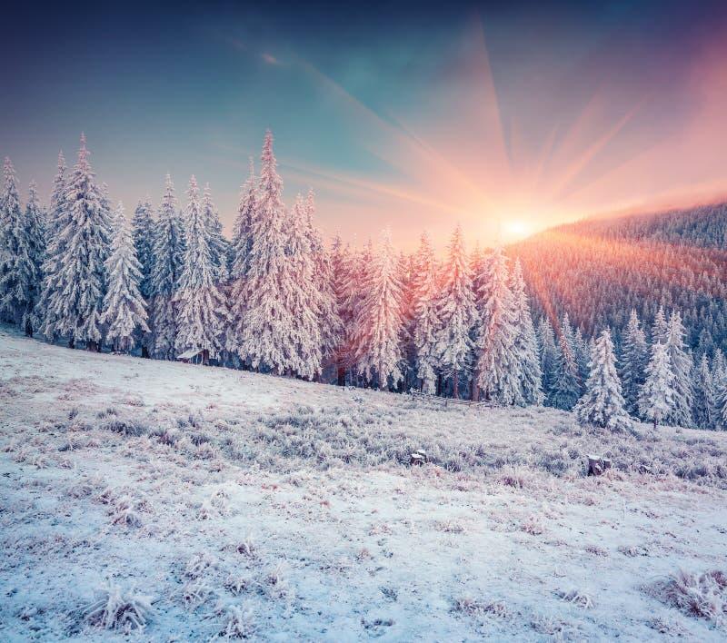 Ζωηρόχρωμη χειμερινή σκηνή στα χιονώδη βουνά στοκ εικόνες
