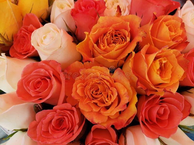ζωηρόχρωμος αυξήθηκε λουλούδια σε μια floral ανθοδέσμη, ένα υπόβαθρο και μια σύσταση στοκ φωτογραφία