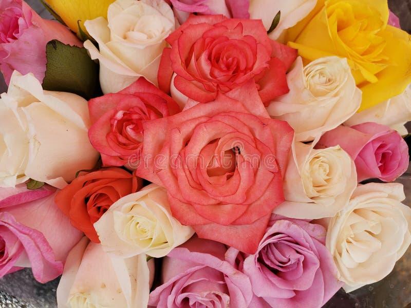 ζωηρόχρωμος αυξήθηκε λουλούδια σε μια floral ανθοδέσμη, ένα υπόβαθρο και μια σύσταση στοκ εικόνα