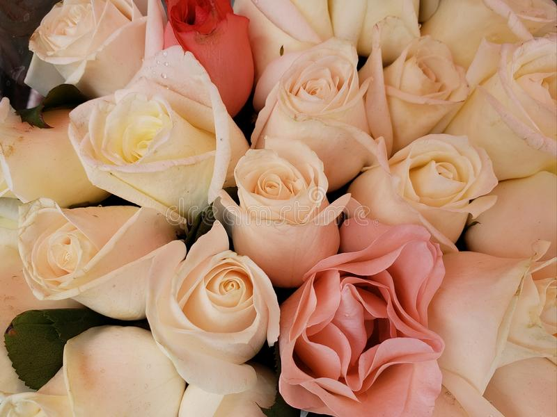 ζωηρόχρωμος αυξήθηκε λουλούδια σε μια floral ανθοδέσμη, ένα υπόβαθρο και μια σύσταση στοκ εικόνες