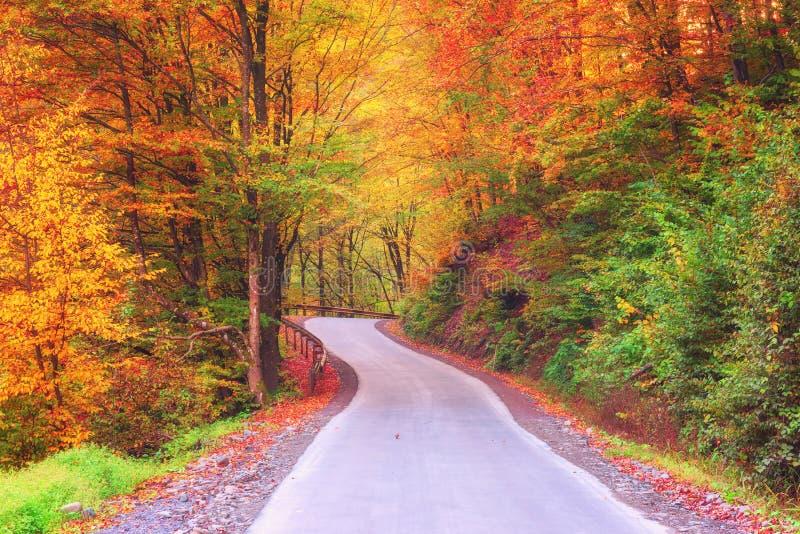 Ζωηρόχρωμος δασικός δρόμος φθινοπώρου, τοπίο φύσης στοκ φωτογραφία με δικαίωμα ελεύθερης χρήσης