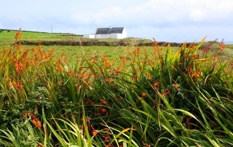 Ζωηρόχρωμος διαχωριστικός φράχτης, δυτική Ιρλανδία στοκ φωτογραφία