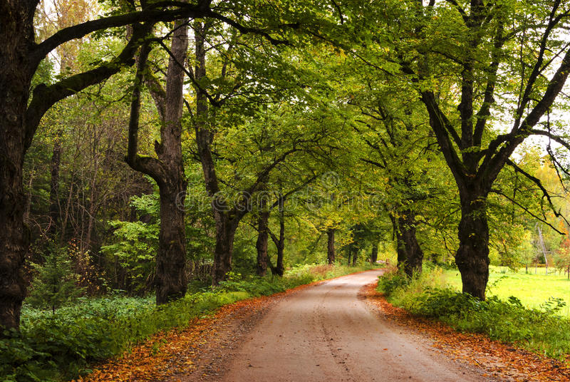 Ζωηρόχρωμος δρόμος δασονομίας μεταξύ των φθινοπωρινών βαλανιδιών στοκ φωτογραφία