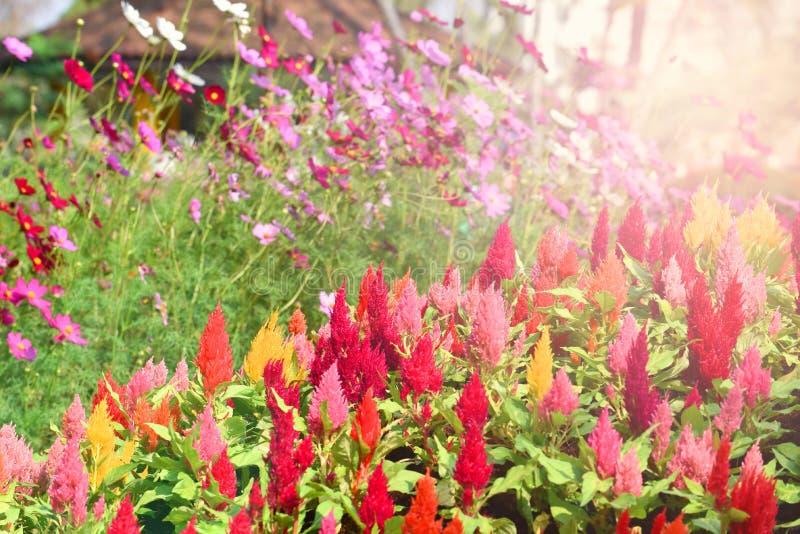 Ζωηρόχρωμος θερινός κήπος λουλουδιών στοκ φωτογραφίες