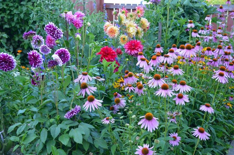 Ζωηρόχρωμος θερινός κήπος στοκ εικόνες
