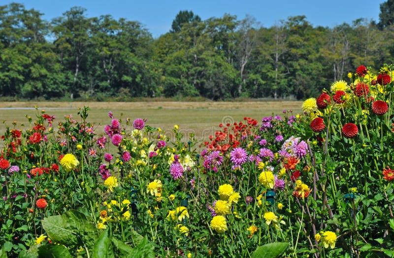 Ζωηρόχρωμος κήπος νταλιών στοκ φωτογραφίες με δικαίωμα ελεύθερης χρήσης