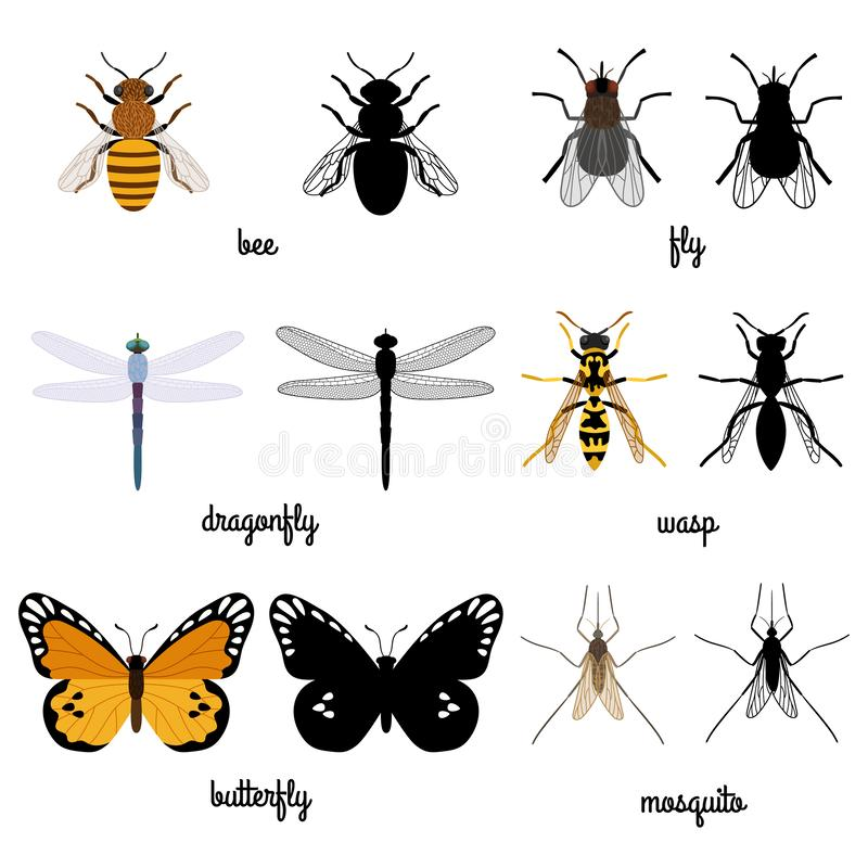 Ζωηρόχρωμος και ο Μαύρος σκιαγραφεί τα ιπτάμενα έντομα που απομονώνονται στο άσπρο υπόβαθρο απεικόνιση αποθεμάτων