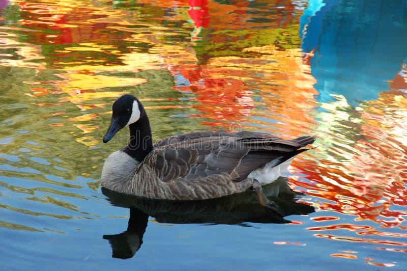 ζωηρόχρωμος κολυμπήστε &ta στοκ εικόνα με δικαίωμα ελεύθερης χρήσης