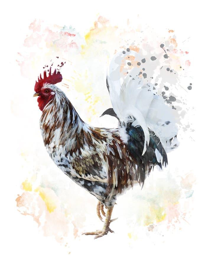 ζωηρόχρωμος κόκκορας ελεύθερη απεικόνιση δικαιώματος