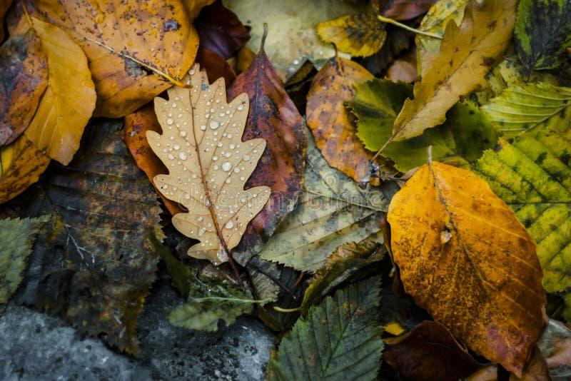 ζωηρόχρωμος ξηρός ανασκόπησης φθινοπώρου βγάζει φύλλα τα φύλλα στοκ εικόνα