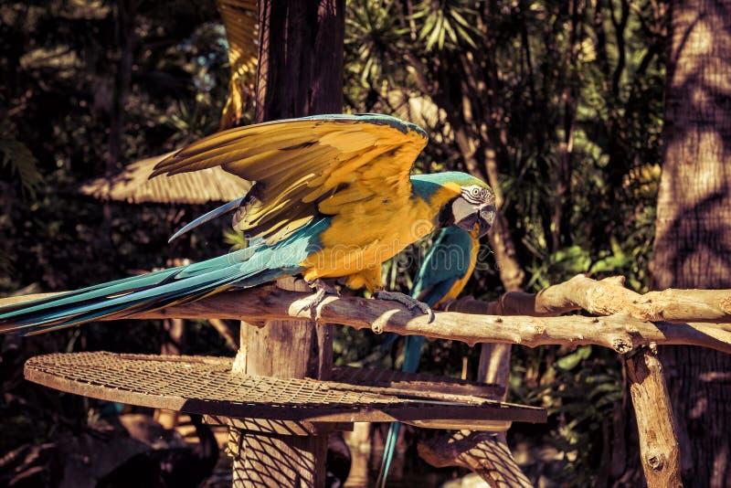 Ζωηρόχρωμος παπαγάλος Macaw έτοιμος να πετάξει στοκ φωτογραφίες με δικαίωμα ελεύθερης χρήσης