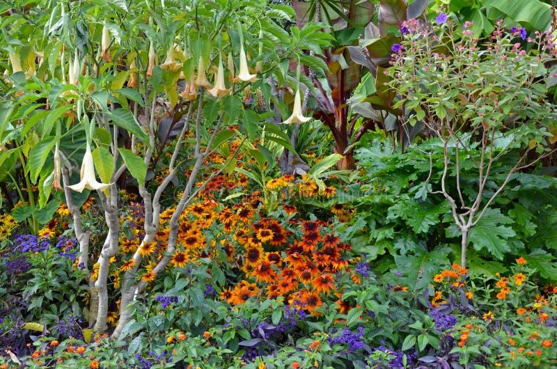 Ζωηρόχρωμος πολύβλαστος κήπος στοκ φωτογραφία με δικαίωμα ελεύθερης χρήσης