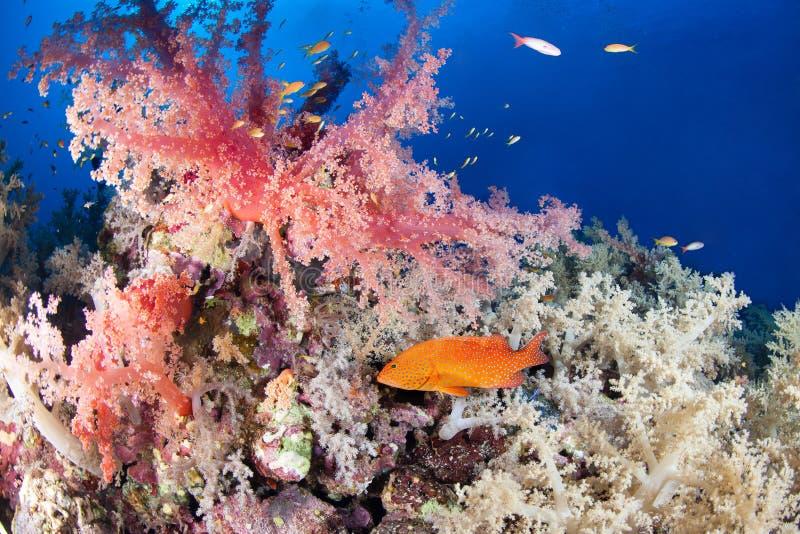 Ζωηρόχρωμος σκόπελος με grouper κοσμημάτων στοκ εικόνες
