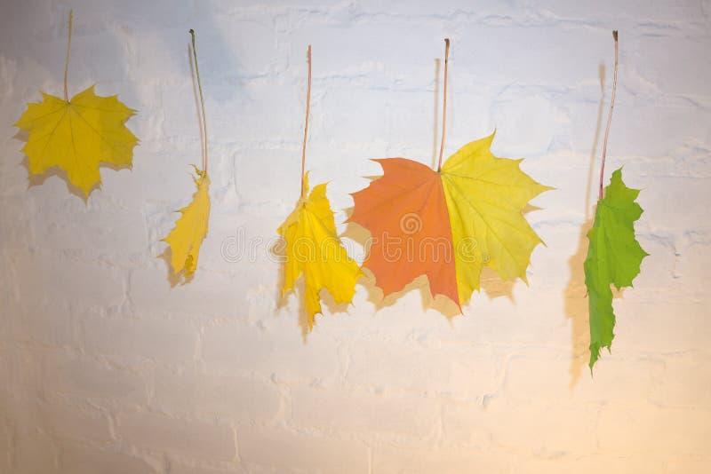 Ζωηρόχρωμος - τα πράσινα κόκκινα κίτρινα φύλλα πτώσης κρέμασαν στη σκοινί για άπλωμα με τους συνδετήρες που χαράστηκαν με τις επι στοκ εικόνα