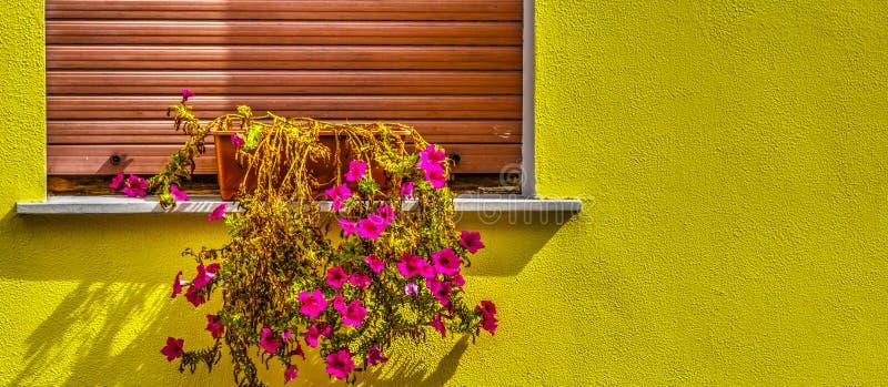 Ζωηρόχρωμος τοίχος με τα δοχεία λουλουδιών στοκ φωτογραφία με δικαίωμα ελεύθερης χρήσης