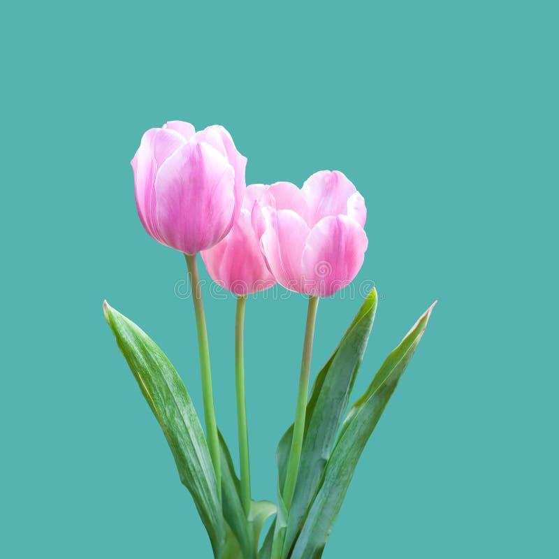 Ζωηρόχρωμος του τομέα λουλουδιών τουλιπών στοκ φωτογραφίες