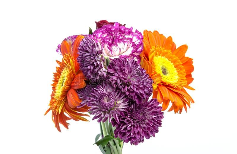 Ζωηρόχρωμος των λουλουδιών που απομονώνονται στο άσπρο υπόβαθρο στοκ φωτογραφία