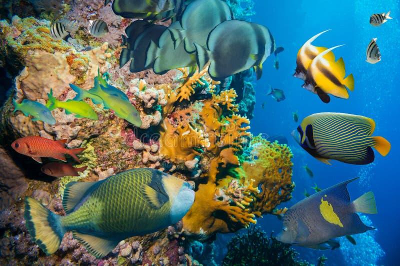 Ζωηρόχρωμος υποβρύχιος σκόπελος με το κοράλλι και τα σφουγγάρια στοκ εικόνα