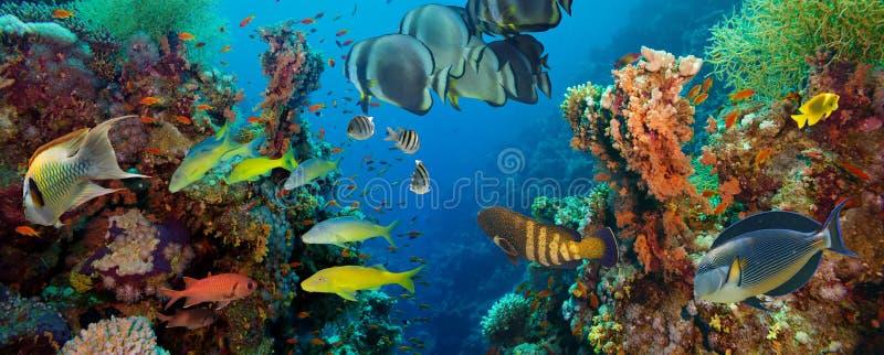 Ζωηρόχρωμος υποβρύχιος σκόπελος με το κοράλλι και τα σφουγγάρια στοκ φωτογραφίες